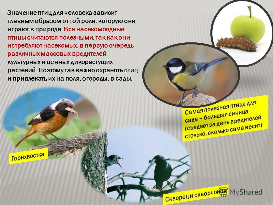 Значение птиц для человека зависит главным образом от той роли, которую они играют в природе. Все насекомоядные птицы считаются полезными, так как они истребляют насекомых, в первую очередь различных массовых вредителей культурных и ценных дикорастущ