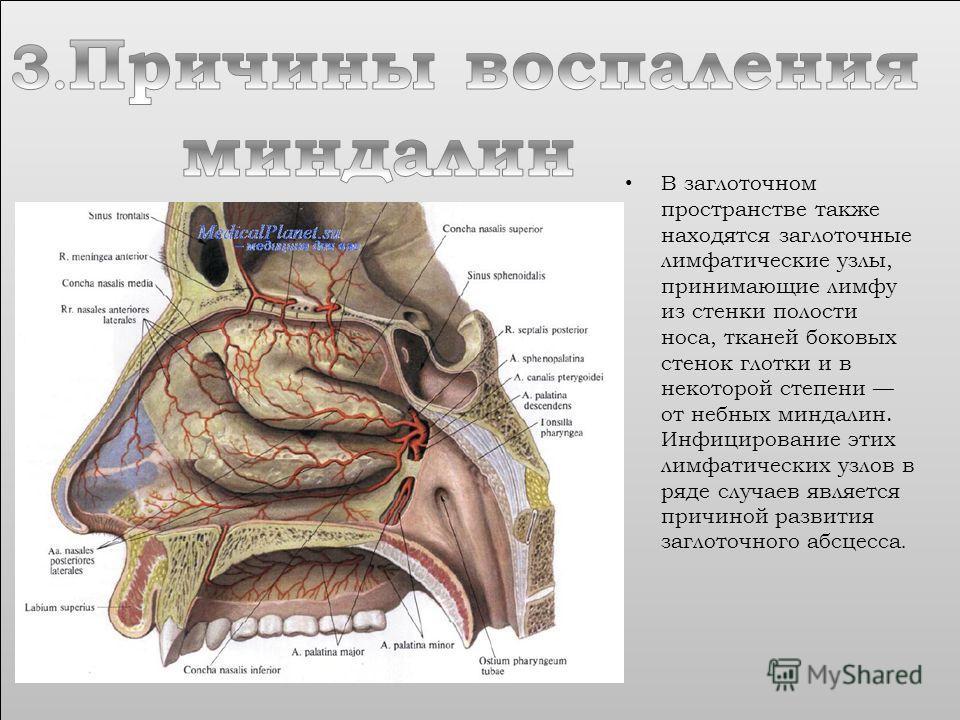 В заглоточном пространстве также находятся заглоточные лимфатические узлы, принимающие лимфу из стенки полости носа, тканей боковых стенок глотки и в некоторой степени от небных миндалин. Инфицирование этих лимфатических узлов в ряде случаев является