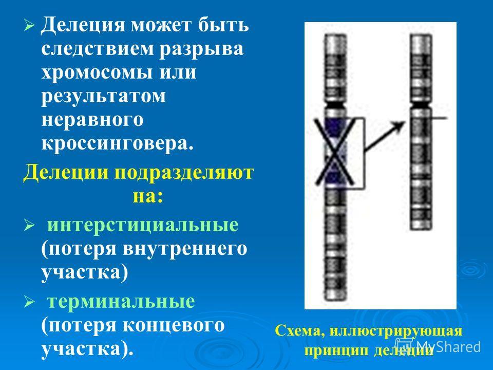 Делеция может быть следствием разрыва хромосомы или результатом неравного кроссинговера. Делеции подразделяют на: интерстициальные (потеря внутреннего участка) терминальные (потеря концевого участка). Схема, иллюстрирующая принцип делеции
