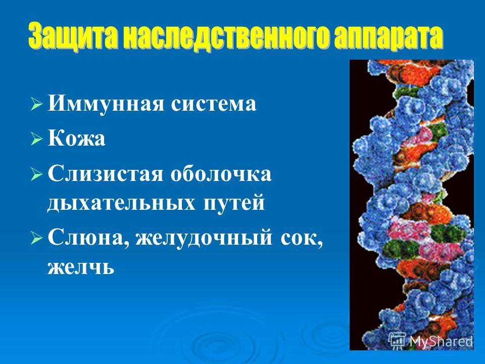 Иммунная система Кожа Слизистая оболочка дыхательных путей Слюна, желудочный сок, желчь