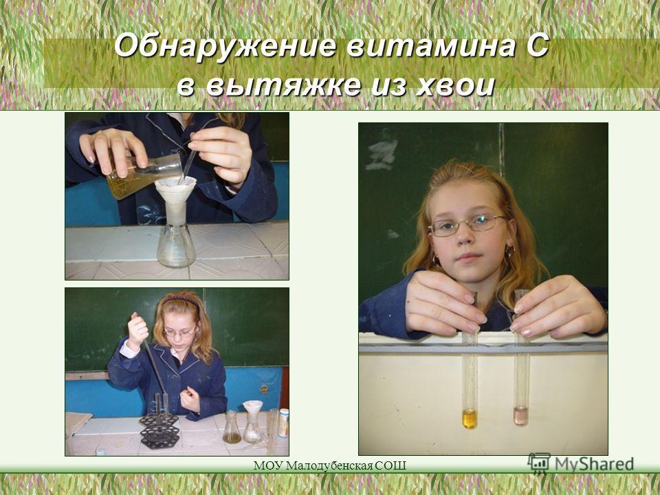 МОУ Малодубенская СОШ Обнаружение витамина С в вытяжке из хвои