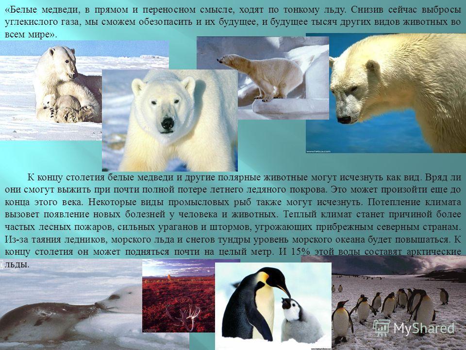«Белые медведи, в прямом и переносном смысле, ходят по тонкому льду. Снизив сейчас выбросы углекислого газа, мы сможем обезопасить и их будущее, и будущее тысяч других видов животных во всем мире». К концу столетия белые медведи и другие полярные жив