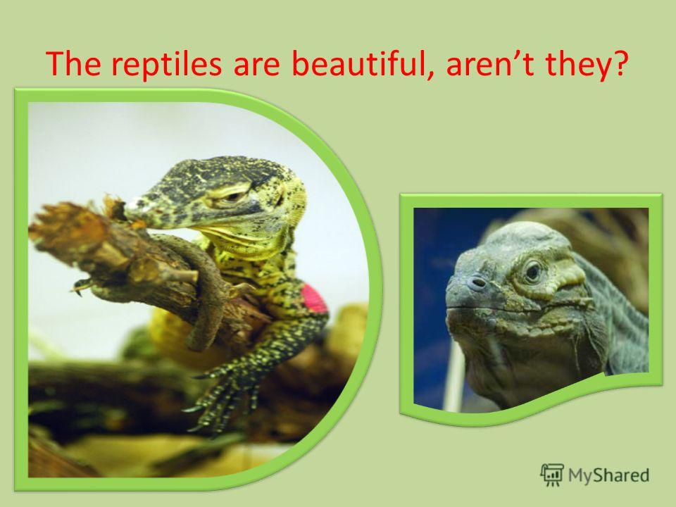 The reptiles are beautiful, arent they?