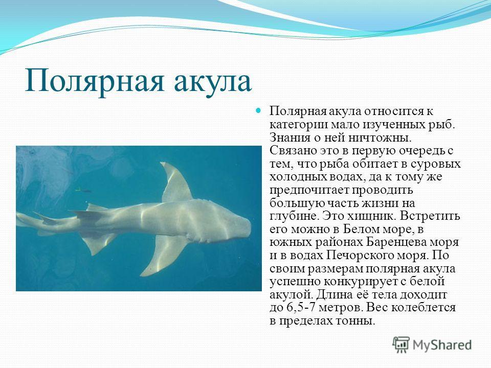 Полярная акула Полярная акула относится к категории мало изученных рыб. Знания о ней ничтожны. Связано это в первую очередь с тем, что рыба обитает в суровых холодных водах, да к тому же предпочитает проводить большую часть жизни на глубине. Это хищн