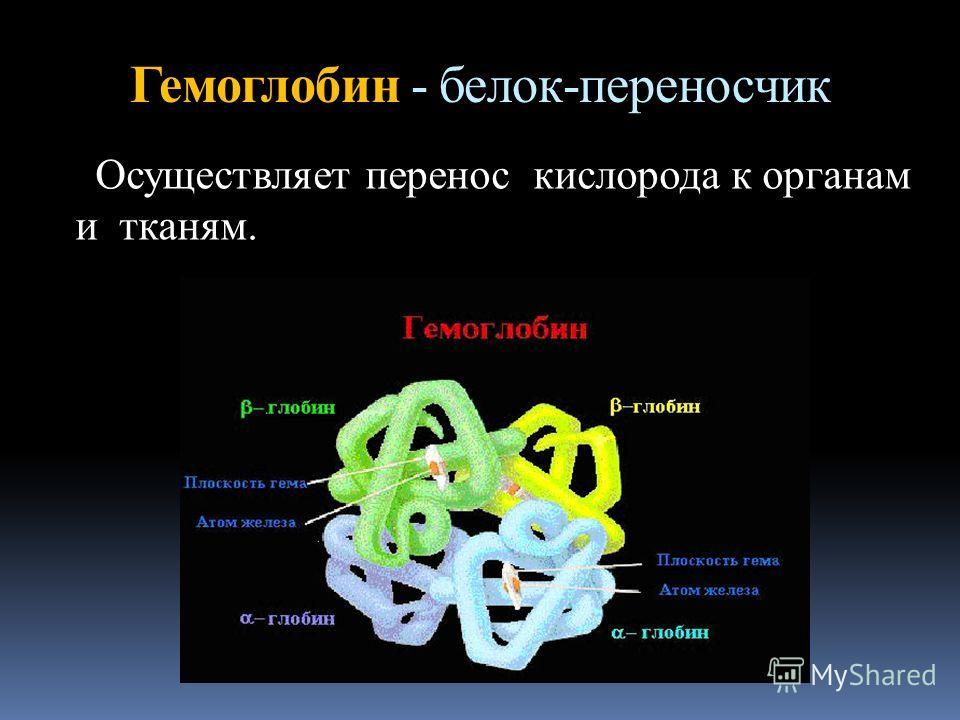 Гемоглобин - белок-переносчик Осуществляет перенос кислорода к органам и тканям.