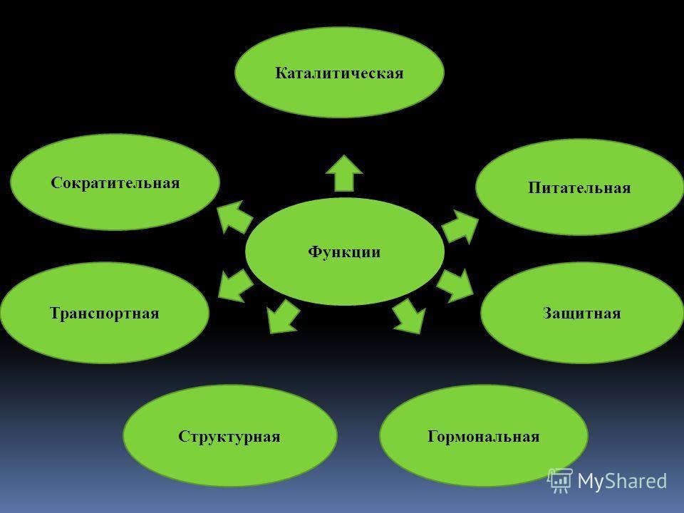 Функции Питательная Гормональная Транспортная Структурная Каталитическая Сократительная Защитная