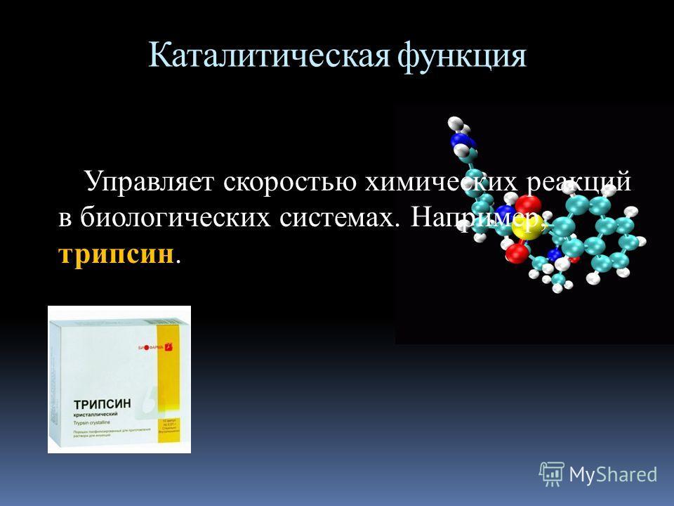 Каталитическая функция Управляет скоростью химических реакций в биологических системах. Например, трипсин.
