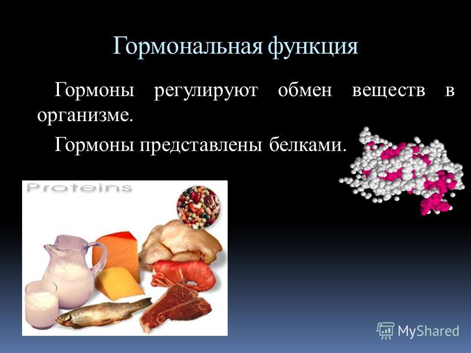 Гормональная функция Гормоны регулируют обмен веществ в организме. Гормоны представлены белками.