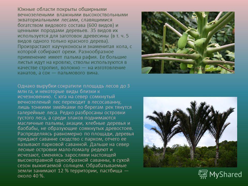 Южные области покрыты обширными вечнозелеными влажными высокоствольными экваториальными лесами, славящимися богатством видового состава (600 видов) и ценными породами деревьев. 35 видов их используется для заготовок древесины (в т. ч. 5 видов одного
