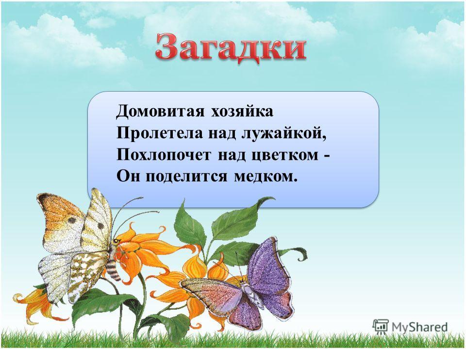 Домовитая хозяйка Пролетела над лужайкой, Похлопочет над цветком - Он поделится медком.