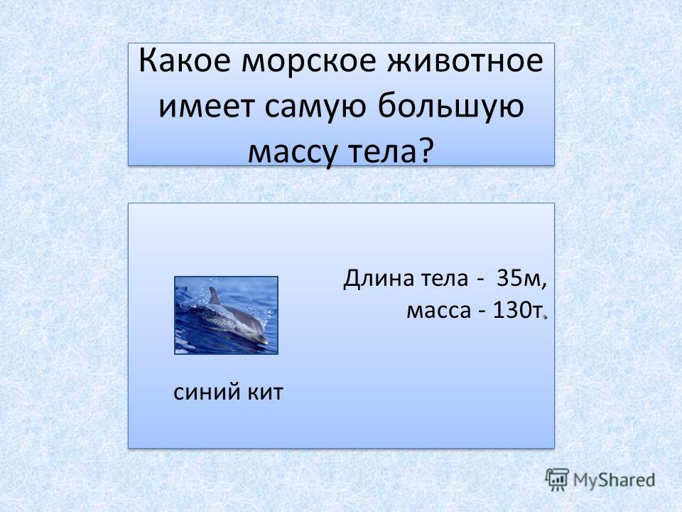 Какое морское животное имеет самую большую массу тела? Длина тела - 35м,. масса - 130т. синий кит Длина тела - 35м,. масса - 130т. синий кит