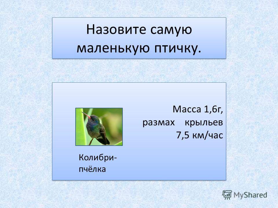 Назовите самую маленькую птичку. Масса 1,6г, размах крыльев 7,5 км/час Колибри- пчёлка Масса 1,6г, размах крыльев 7,5 км/час Колибри- пчёлка