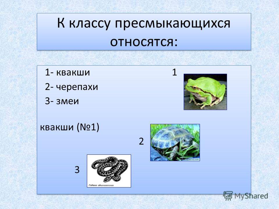 К классу пресмыкающихся относятся: 1- квакши 1 2- черепахи 3- змеи квакши (1) 2 3 1- квакши 1 2- черепахи 3- змеи квакши (1) 2 3