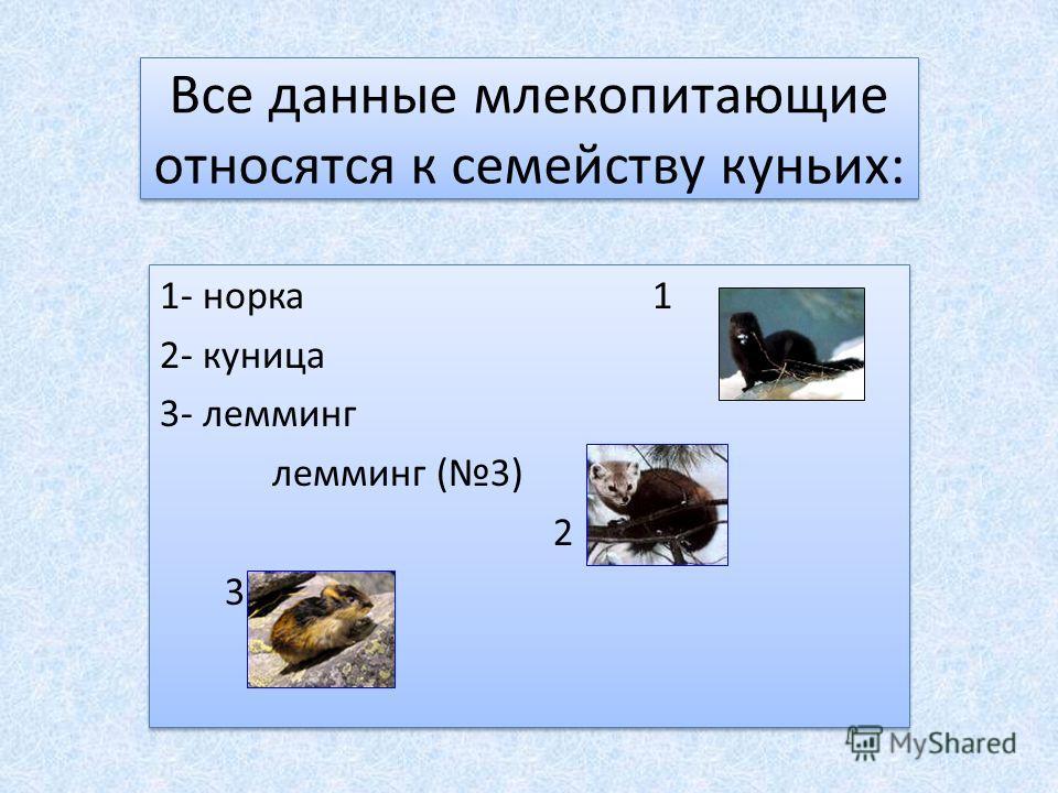 Все данные млекопитающие относятся к семейству куньих: 1- норка 1 2- куница 3- лемминг лемминг (3) 2 3 1- норка 1 2- куница 3- лемминг лемминг (3) 2 3