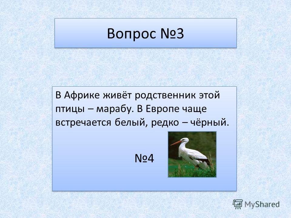Вопрос 3 В Африке живёт родственник этой птицы – марабу. В Европе чаще встречается белый, редко – чёрный. 4 В Африке живёт родственник этой птицы – марабу. В Европе чаще встречается белый, редко – чёрный. 4