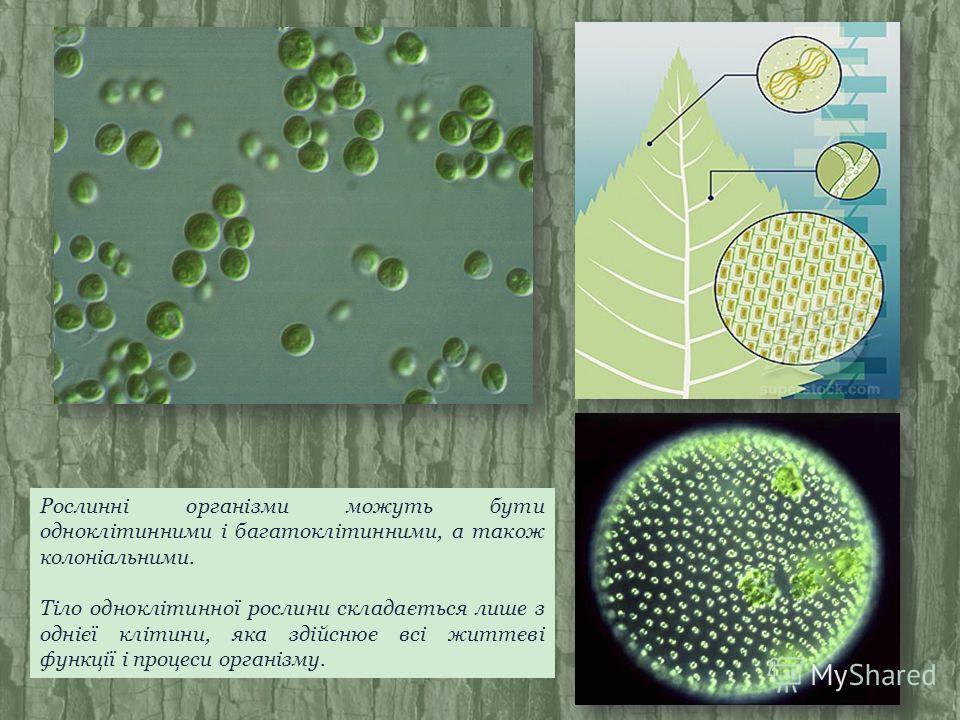 Рослинні організми можуть бути одноклітинними і багатоклітинними, а також колоніальними. Тіло одноклітинної рослини складається лише з однієї клітини, яка здійснює всі життєві функції і процеси організму.