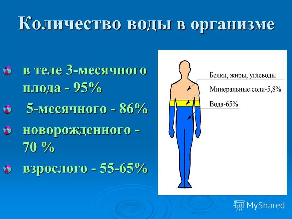 Количество воды в организме в теле 3-месячного плода - 95% 5-месячного - 86% новорожденного - 70 % взрослого - 55-65%