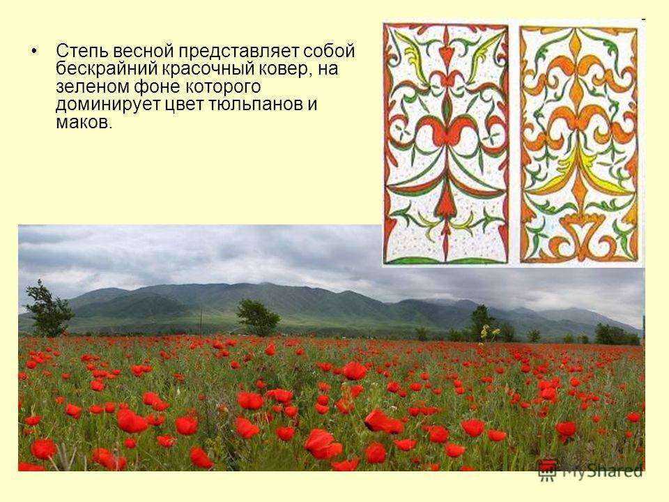 Доминирует цвет тюльпанов и маков