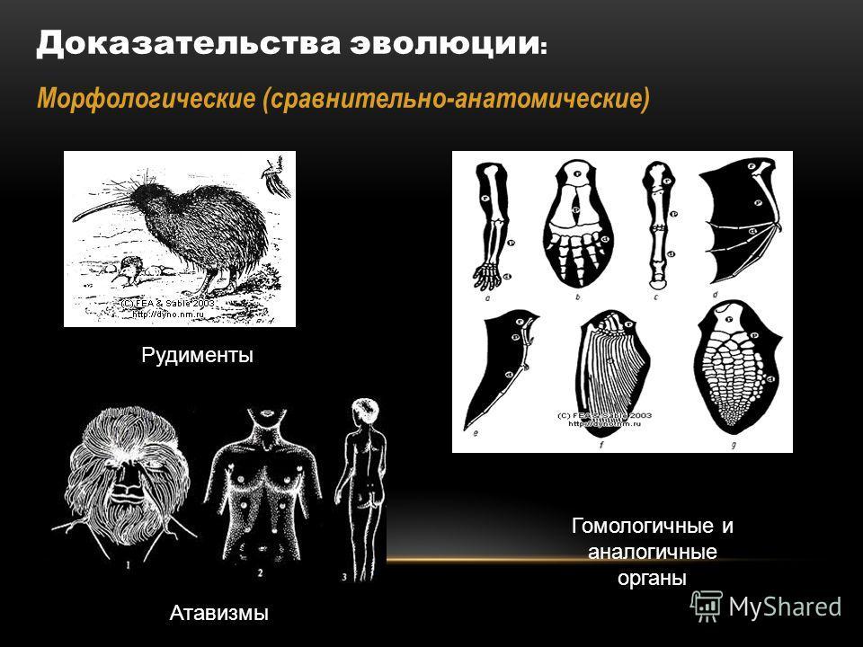 Доказательства эволюции : Морфологические (сравнительно-анатомические) Гомологичные и аналогичные органы Атавизмы Рудименты