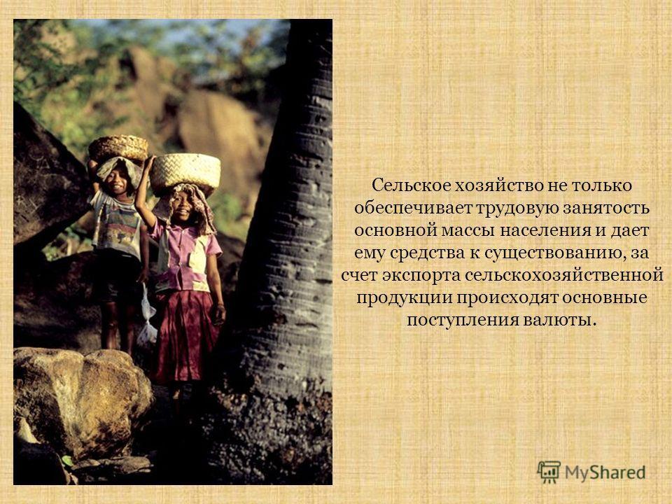 Сельское хозяйство не только обеспечивает трудовую занятость основной массы населения и дает ему средства к существованию, за счет экспорта сельскохозяйственной продукции происходят основные поступления валюты.