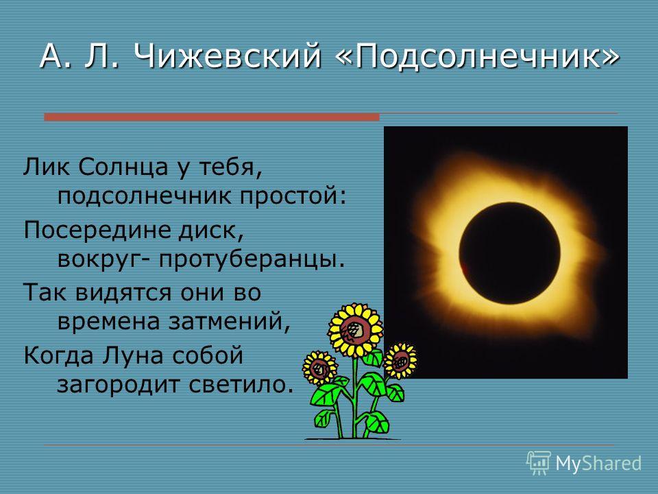 А. Л. Чижевский «Подсолнечник» Лик Солнца у тебя, подсолнечник простой: Посередине диск, вокруг- протуберанцы. Так видятся они во времена затмений, Когда Луна собой загородит светило.