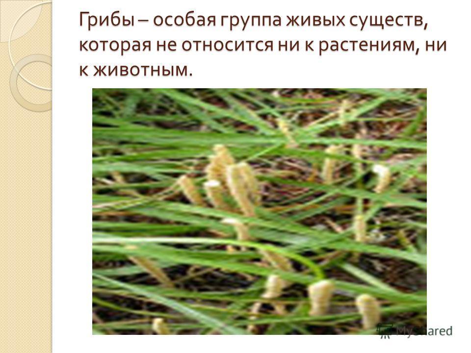 Грибы – особая группа живых существ, которая не относится ни к растениям, ни к животным.