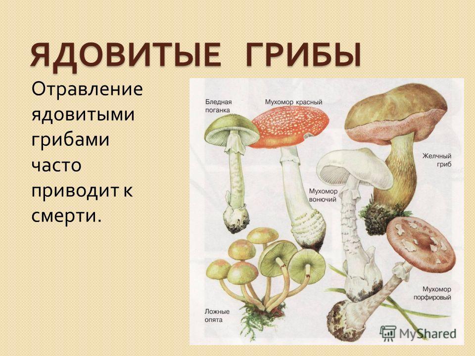 ЯДОВИТЫЕ ГРИБЫ Отравление ядовитыми грибами часто приводит к смерти.