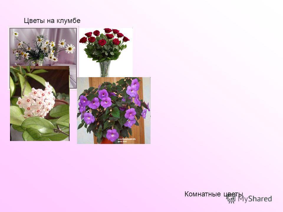 Цветы на клумбе Комнатные цветы