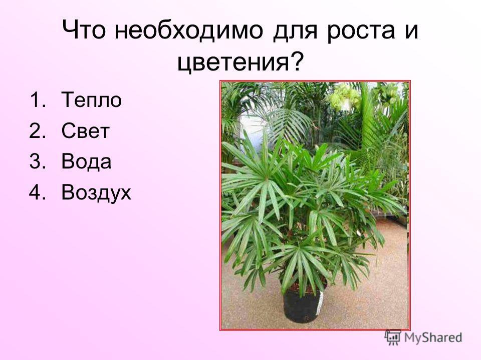 Что необходимо для роста и цветения? 1.Тепло 2.Свет 3.Вода 4.Воздух