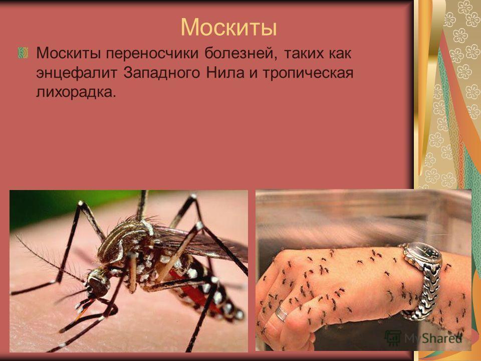Москиты Москиты переносчики болезней, таких как энцефалит Западного Нила и тропическая лихорадка.