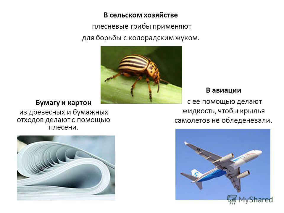 В сельском хозяйстве плесневые грибы применяют для борьбы с колорадским жуком. Бумагу и картон из древесных и бумажных отходов делают с помощью плесени. В авиации с ее помощью делают жидкость, чтобы крылья самолетов не обледеневали.
