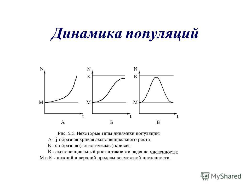 Динамика популяций