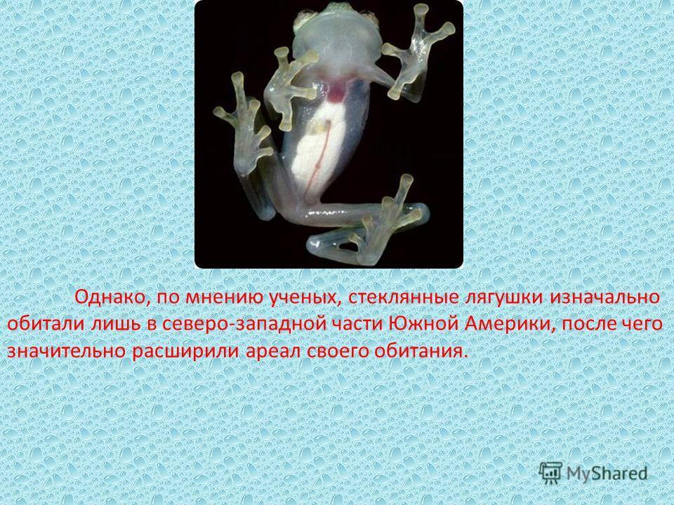Однако, по мнению ученых, стеклянные лягушки изначально обитали лишь в северо-западной части Южной Америки, после чего значительно расширили ареал своего обитания.