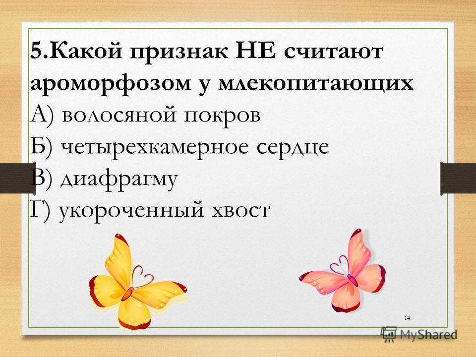 14 5.Какой признак НЕ считают ароморфозом у млекопитающих А) волосяной покров Б) четырехкамерное сердце В) диафрагму Г) укороченный хвост