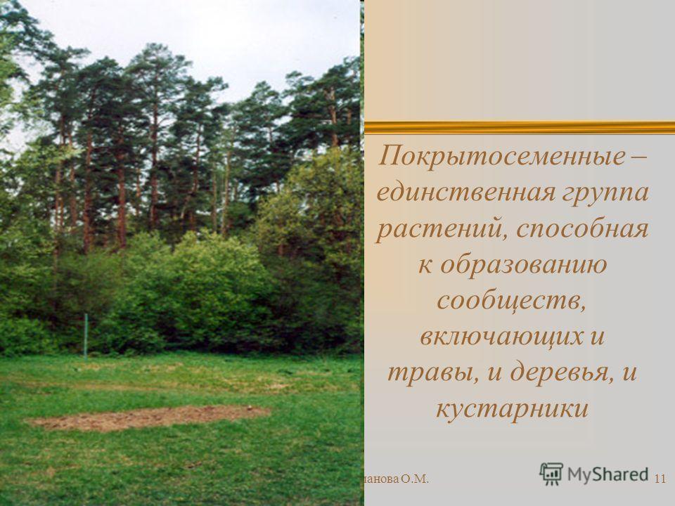 23.10.2013Романова О.М.11 Покрытосеменные – единственная группа растений, способная к образованию сообществ, включающих и травы, и деревья, и кустарники