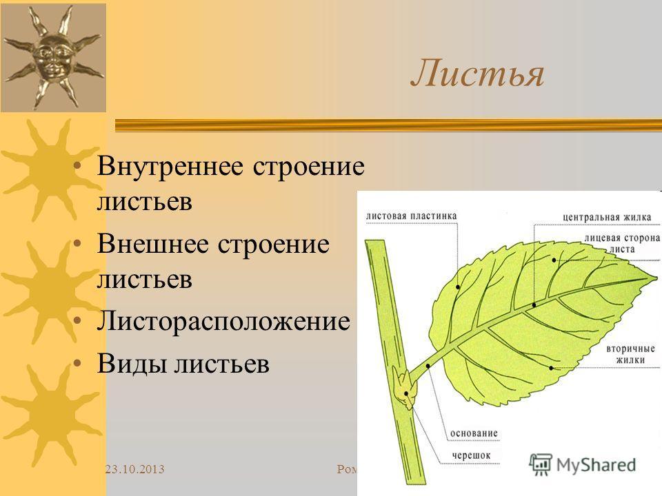 Доклад по биологии 6 класс на тему клеточное строение листа