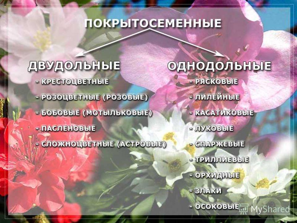 23.10.2013Романова О.М.4
