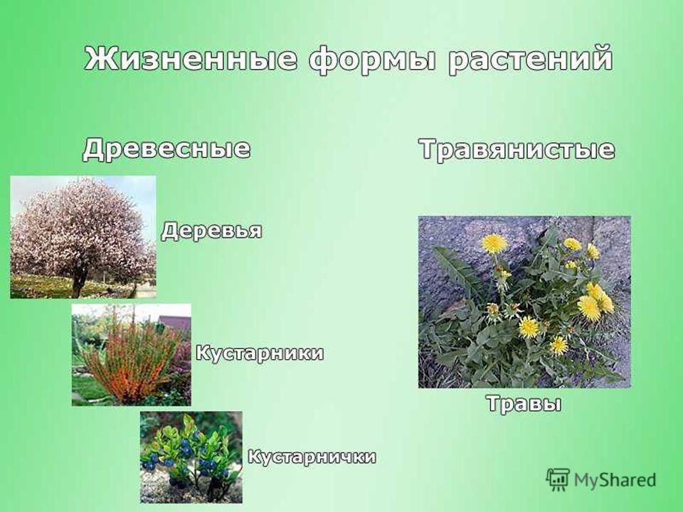 23.10.2013Романова О.М.8