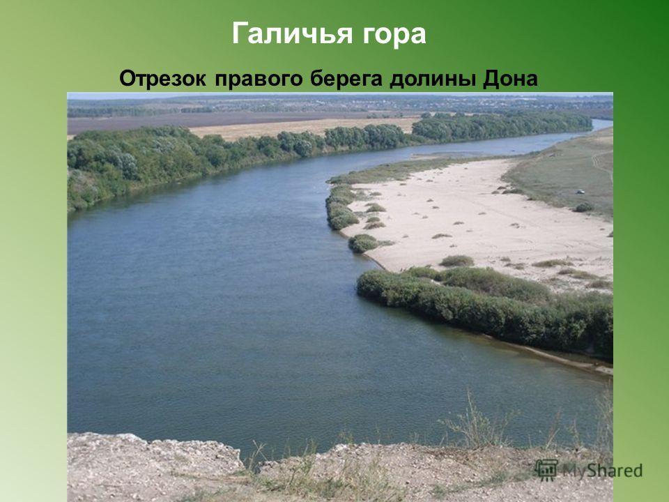 Галичья гора Отрезок правого берега долины Дона