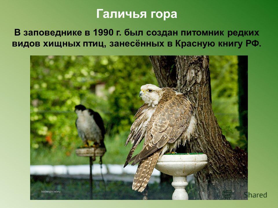 В заповеднике в 1990 г. был создан питомник редких видов хищных птиц, занесённых в Красную книгу РФ.