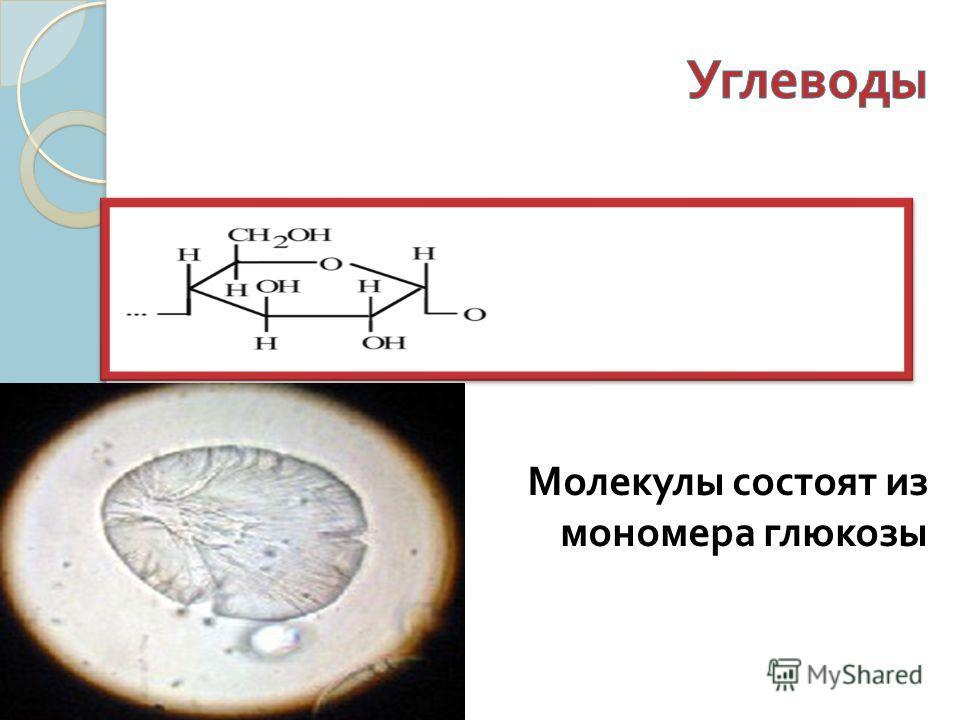 Молекулы состоят из мономера глюкозы