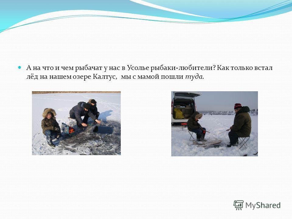 А на что и чем рыбачат у нас в Усолье рыбаки-любители? Как только встал лёд на нашем озере Калтус, мы с мамой пошли туда.