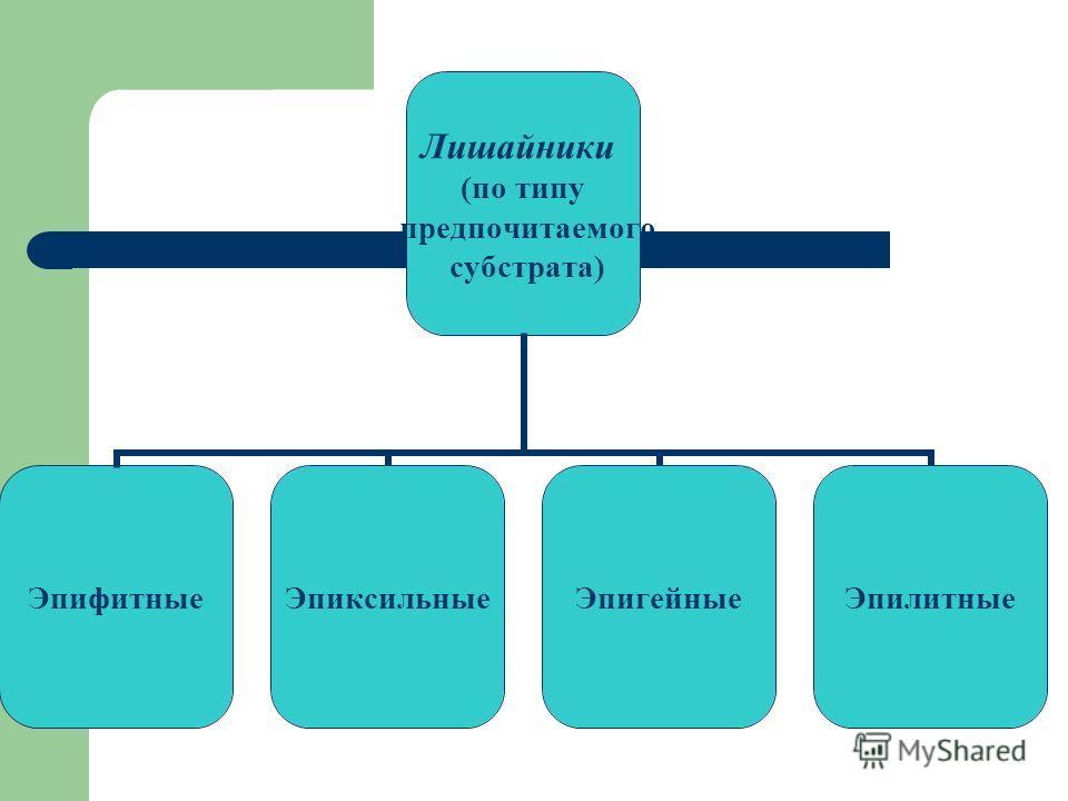 Лишайники (по типу предпочитаемого субстрата) ЭпифитныеЭпиксильныеЭпигейныеЭпилитные