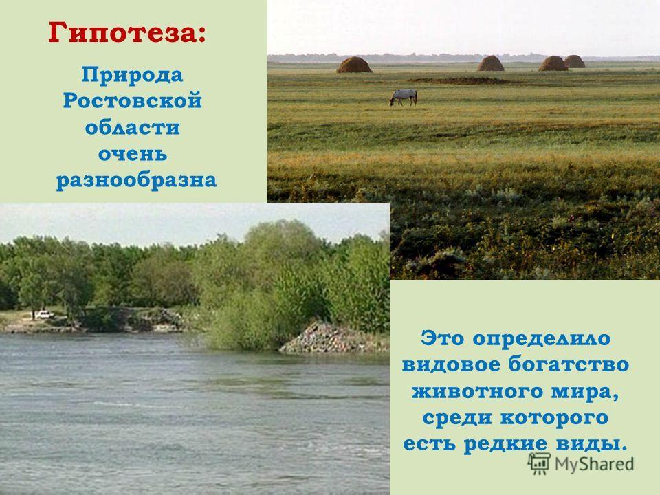Природа Ростовской области очень разнообразна Это определило видовое богатство животного мира, среди которого есть редкие виды. Гипотеза: