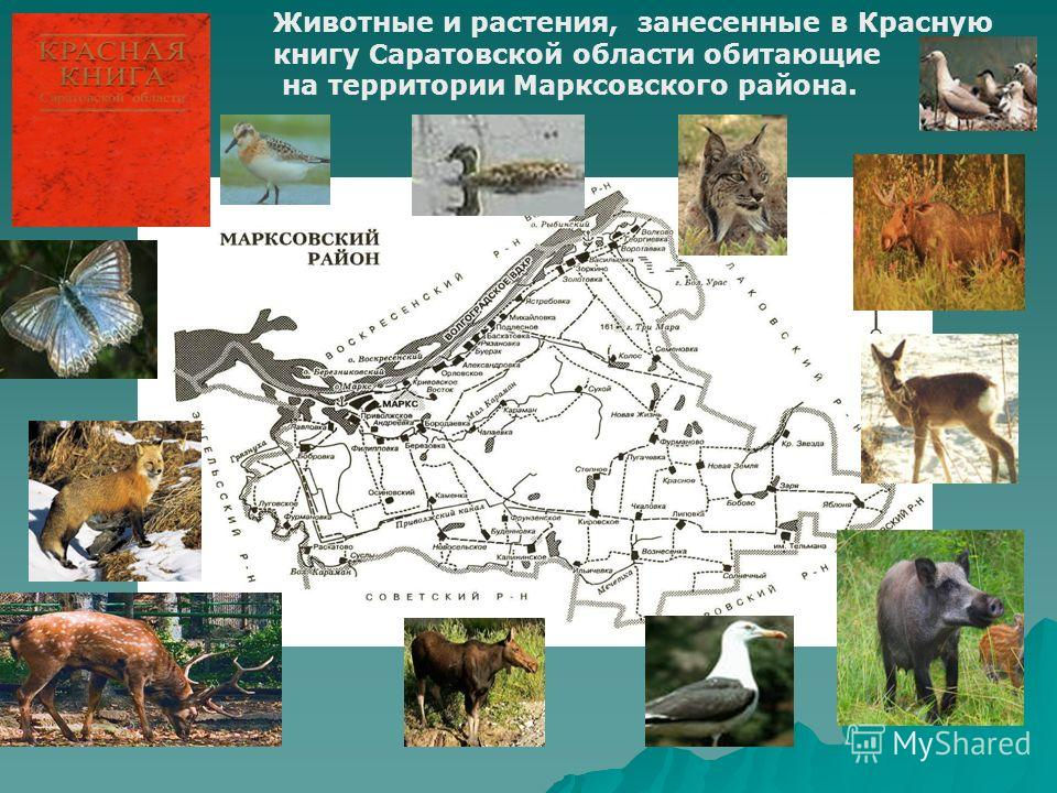Животные и растения, занесенные в Красную книгу Саратовской области обитающие на территории Марксовского района.