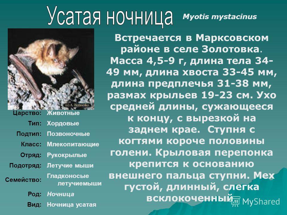Царство:Животные Тип:Хордовые Подтип:Позвоночные Класс:Млекопитающие Отряд:Рукокрылые Подотряд:Летучие мыши Семейство: Гладконосые летучиемыши Род:Ночница Вид:Ночница усатая Встречается в Марксовском районе в селе Золотовка. Масса 4,5-9 г, длина тела