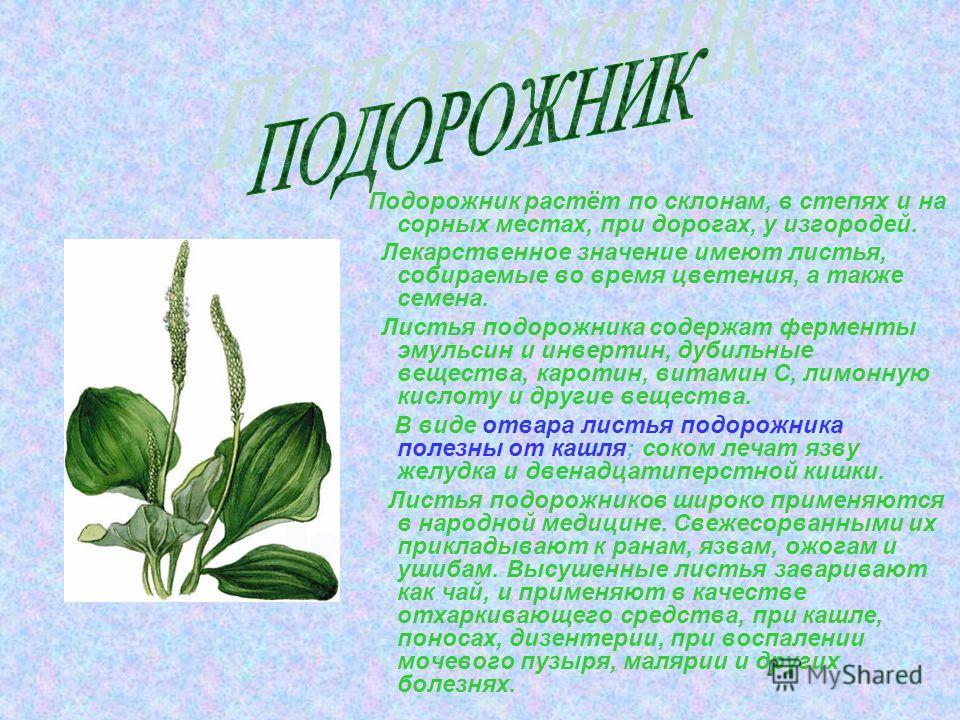 Ландыш Ландыш- это декоративное растение выращиваемое ещё с 18 века. Всё растение ландыша ядовито, но препараты из его листьев, цветков, семян- лекарственные средства, которые укрепляют и улучшают работу сердца. Это растение используют и парфюмеры –