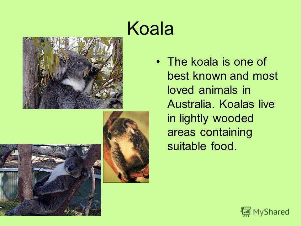 Koala The koala is one of best known and most loved animals in Australia. Koalas live in lightly wooded areas containing suitable food.
