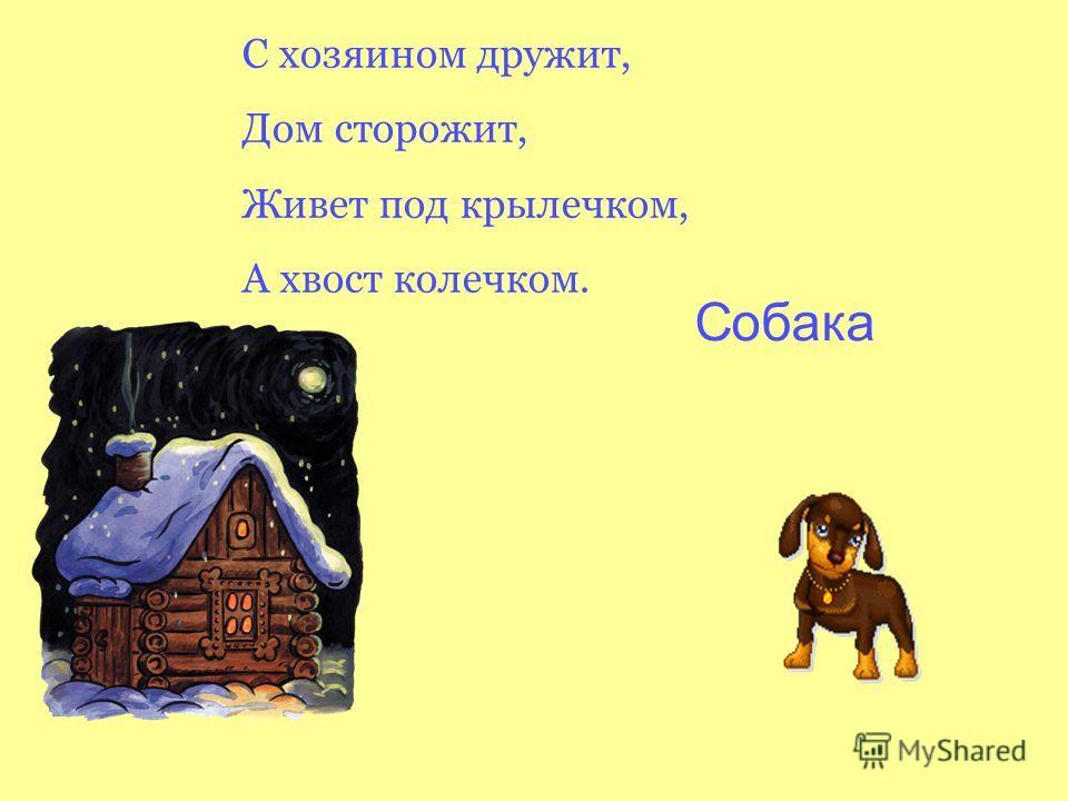 С хозяином дружит, Дом сторожит, Живет под крылечком, А хвост колечком. Собака