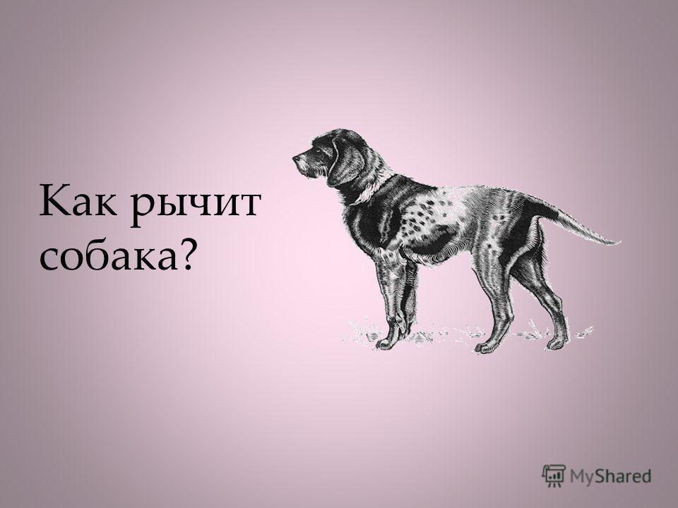 Как рычит собака?